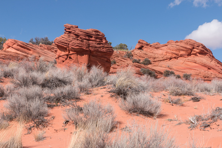 paria canyon: Plants and sandstone buttes of Paria Canyon, USA