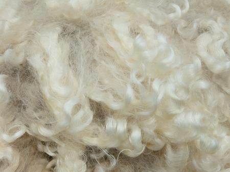 merino: Texture of curly merino wool