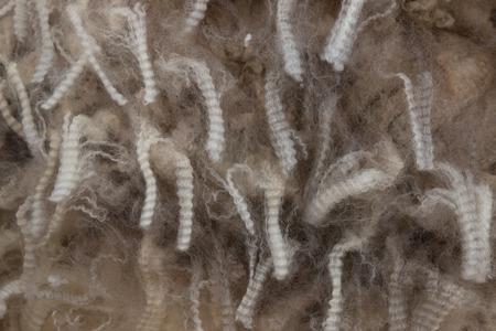 unprocessed: Staples of unprocessed fine merino wool