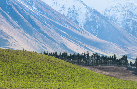 canterbury: Green hill with background of blue moiuntains, Canterbury, New Zealand
