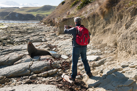 packsack: Man taking picture of fur seal with mobile phone