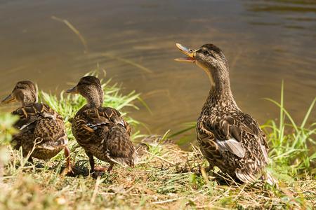 alarmed: Alarmed bird calls the baby birds