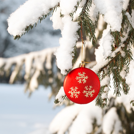 Winter park. The red sphere hangs on a branch of a fir-tree.