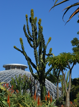 hot house: Hot house with cactus plants and blue sky Stock Photo