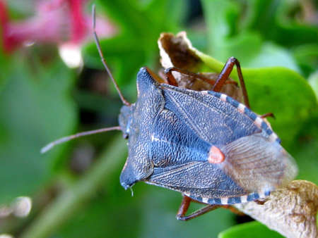 the antennae: A detailed blue bug with antennae