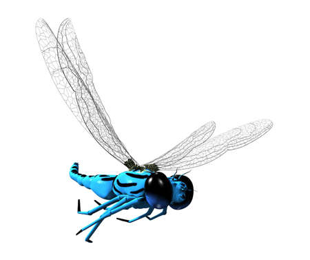 dragonfly wing: 3D blue dragonfly with transparent wings and big eyes