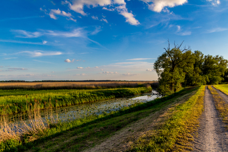 common reed: Sunset over green fields and a river in a natural reserve in northern Germany Stock Photo