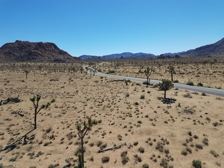 joshua tree national park: View over the road running through the desert landscape of the Joshua Tree Park in California