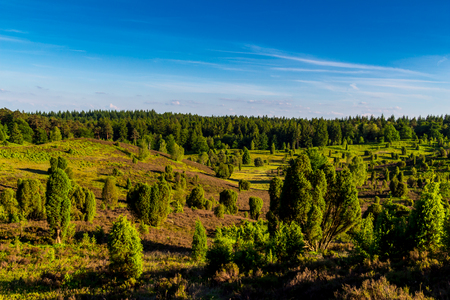 Nice view over the purple heath valley Totengrund in the natural reserve Lüneburger Heide
