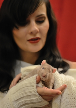 Rat on hands for a beautiful brunette  photo