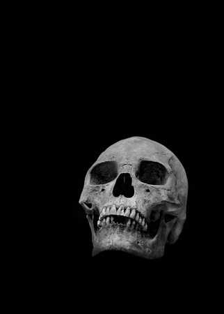adult bones: The human skull on a black background in black and white.