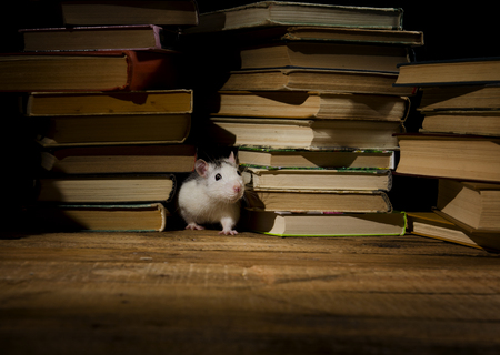 OLD LIBRARY: Decorative rat with old books in the library.
