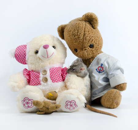 soft toys: Intelligent and funny pets decorative rat and old soft toys. Stock Photo