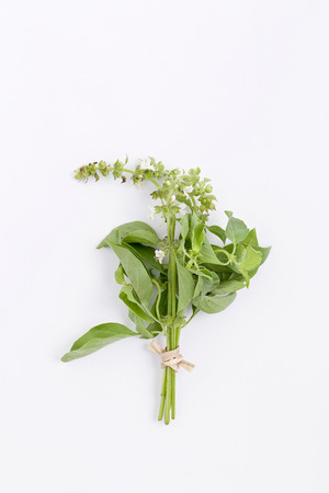 hoary: bundle of fresh hoary basil isolated on white
