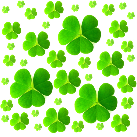 St. Patricks day. Isolated clover leaves on white background