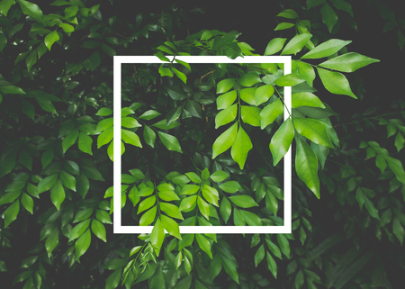 Creative layout made of leaves with white paper frame. Flat lay. Nature concept