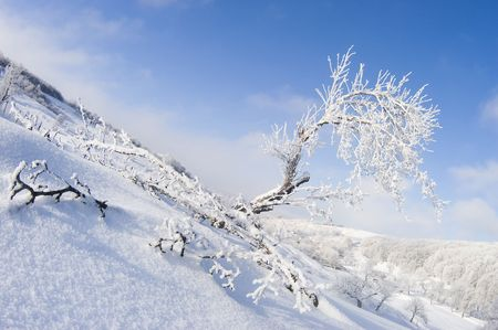 Winter landscape with snowy tree and forest Standard-Bild