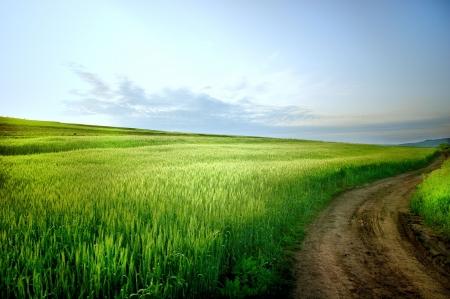 Paesaggio rurale con su strada e cielo blu