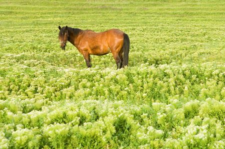 Field with perfect green grass and horse photo