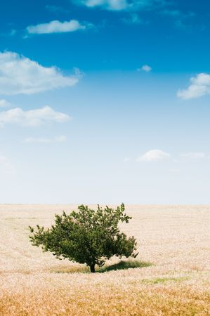 Rural landscape with wheat field, tree, and beautiful cloudscape Stock Photo - 5330549