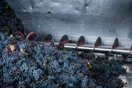 grape processing on the machine