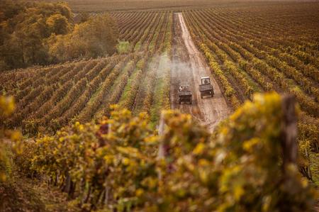 working machines on the field grape Standard-Bild
