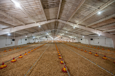Chicken farm Фото со стока - 70857325
