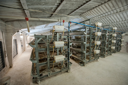Poultry processing plant line. Production of chicken meat.