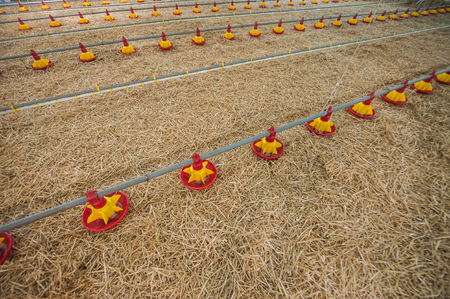 large poultry farms, is preparing to move to a new location 写真素材