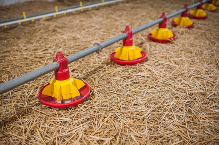 large poultry farms, is preparing to move to a new location Standard-Bild