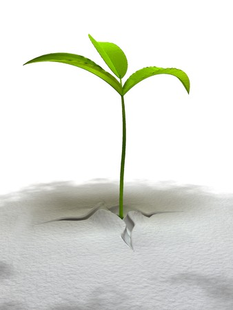 3d rendering growing plant with three leafs on the white background