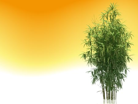 Bushes of a green bamboo on an orange background Stock Photo