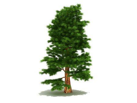 Harmonous green pine on a white background