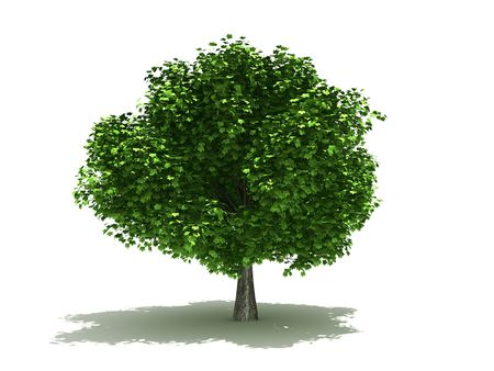 Rendered in 3D tree. On white background  Stock Photo