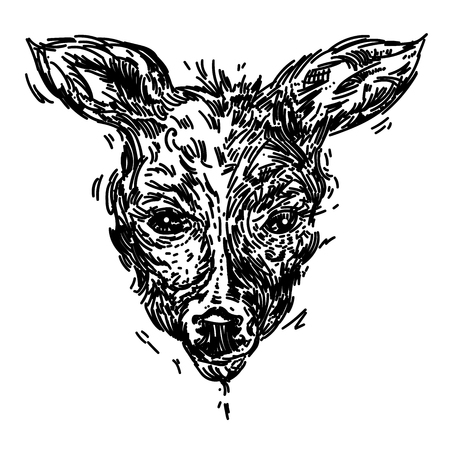 Hand drawn realistic sketch of a deer, isolated on background  イラスト・ベクター素材