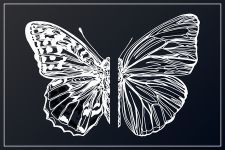 Beautiful hand drawn sketching butterflies pattern vector illustration. Figure in the style of boho. Isolated image.