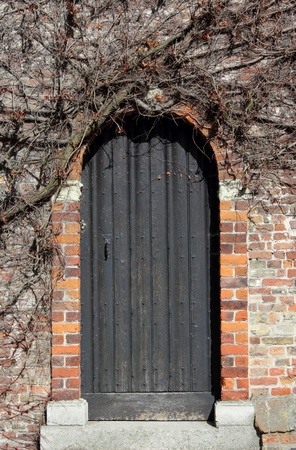 Ancient wooden door in Bruges covered in ivy Stock Photo - 13410729
