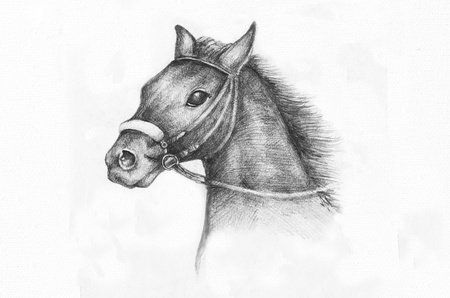 reins: Detail of a horse etude, pencil drawing on white paper artist at age of 15.