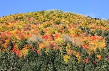 greatest: Slopes high in the mountain dressed up in vibrant colors by the greatest artist of all, her majesty the nature.