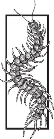 black and white illustration with giant centipede engraved style