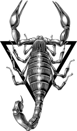 arachnid: black and white image of scorpion engraving style