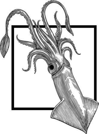 calamar: Ilustraci�n blanco y negro de sepia sobre fondo blanco