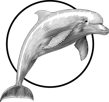 sealife: black and white illustration of jumping dolphin engraving style. Frame can be  removed easily.