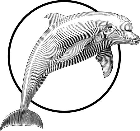 dolphin: zwart-wit illustratie van springen dolfijnen graveren stijl. Frame gemakkelijk kan worden verwijderd. Stock Illustratie
