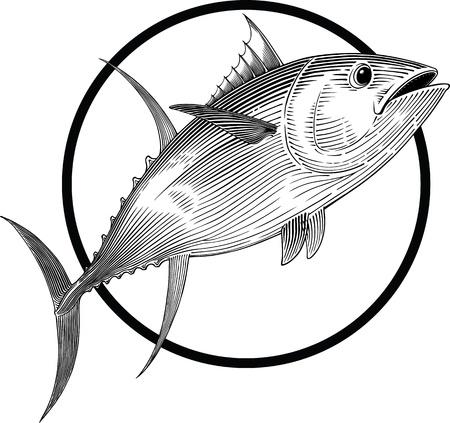 atun: Ilustración en blanco y negro de atún al estilo de grabado. Marco redondo se puede quitar fácilmente.