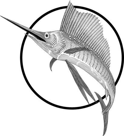 black and white illustration of sailfish engraving style. Round frame can be easily removed. Ilustração