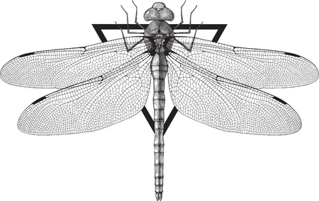 could: Black and white vector image of dragonfly engraving style. Triangle frame could be removed easily Illustration