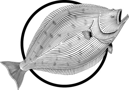 easily: Black and white illustration of halibut engraving style. Round frame can be easily removed