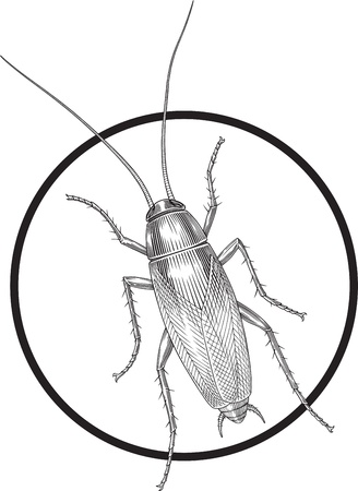 Black and white vector image of cockroach engraving style  Circle frame can be removed easily  Ilustração