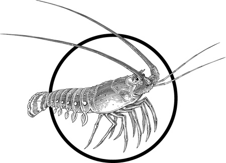 Black and white engraving illustration of lobster with a circle frame. Banco de Imagens - 14035299